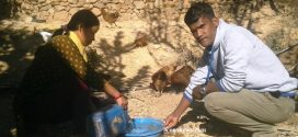 रसियामा एमबीबीएसको पढाई छोडर गाउँमा पशुपालन